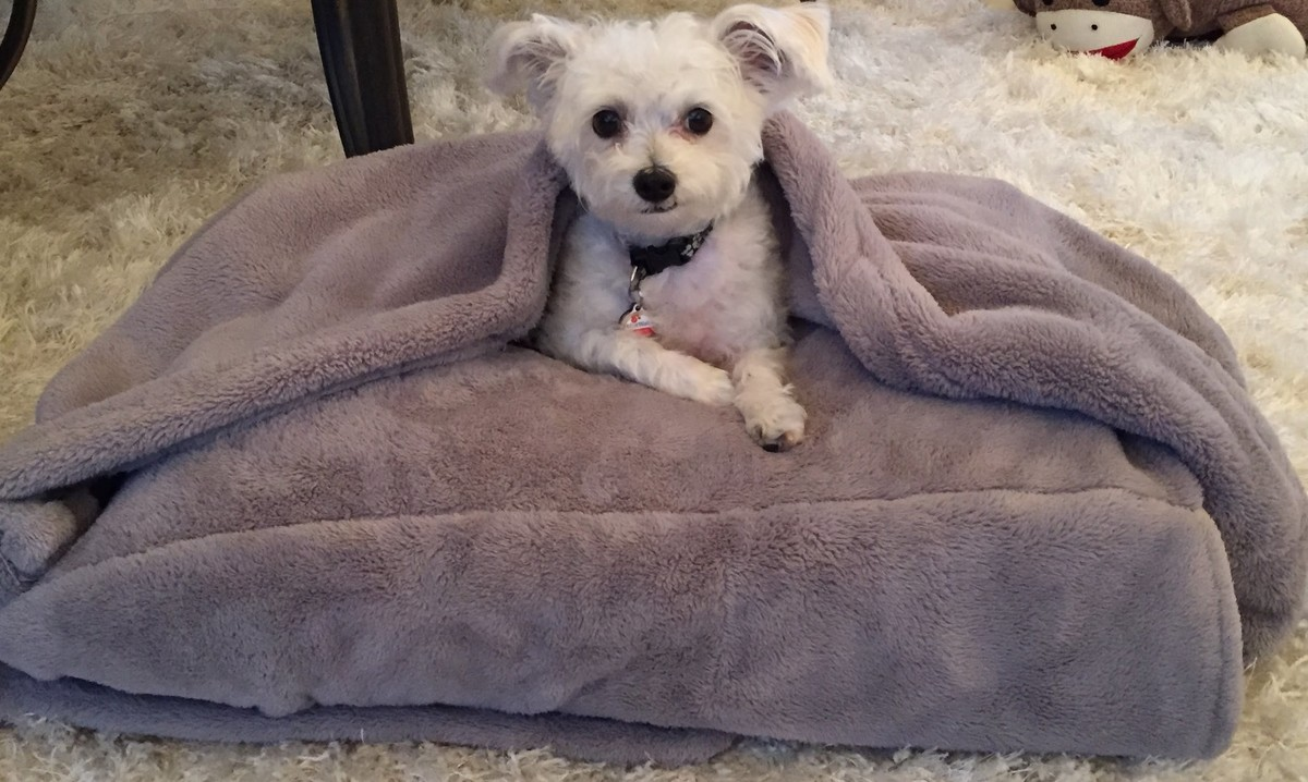 Dog hogging the bed - Skip The Expensive Pet Store Options And Make Your Own Dog Bed At Home