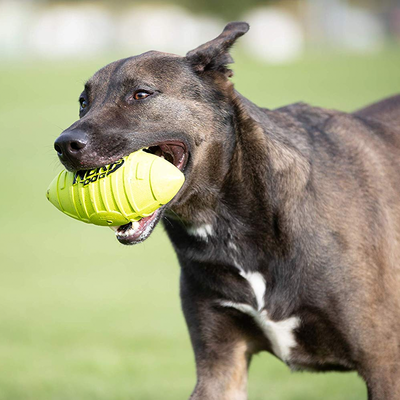 Nerf toys for dogs