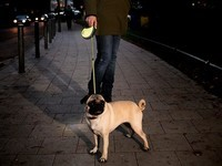 Best Retractable Dog Leashes 2021