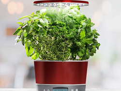 Grow herbs in your kitchen with AeroGarden's discounted Harvest Elite 360 for $100