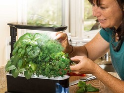Garden all year round with the $100 AeroGarden Sprout Gourmet Herb Seed Pod Kit