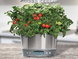 Cultivate countertop crops with AeroGarden's Harvest Elite 360 at $80 off