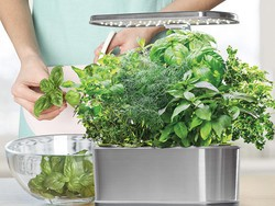 Grow your own herbs with the AeroGarden Harvest Elite on sale for $100