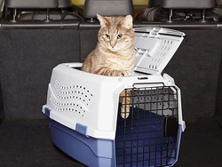Best cat carriers in 2020