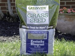Best bluegrass seed in 2020