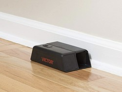 Best mouse traps in 2021