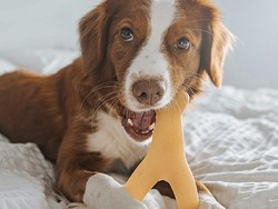These are the best dog toys for aggressive chewers in 2021