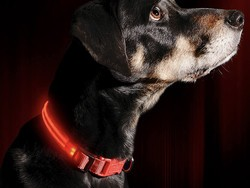 Grab one of the best light up collars for your dog in 2021