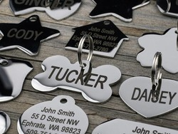 Best pet ID tags for 2021