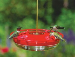 Best hummingbird feeder 2021