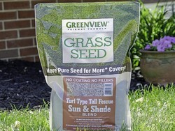 Best sun and shade grass seed 2021