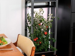 Grow your own salad indoors with the AeroGarden Farm 12XL down to $400