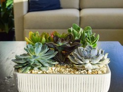 Breathe some life into your home with one-day deals on Costa Farms houseplants