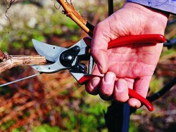 Keep your garden looking great with these $43 Felco manual pruners