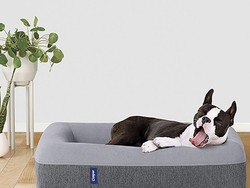 Improve your good boy's sleep with this Casper Dog Bed down to $102