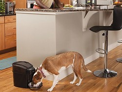 Keep your pet fed and your schedule free with this $93 PetSafe automatic feeder