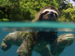 Let David Attenborough soothe your soul with the $25 Planet Earth Collection
