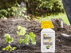 This 32-ounce bottle of Roundup Poison Ivy Plus Tough Brush Killer is down to $19