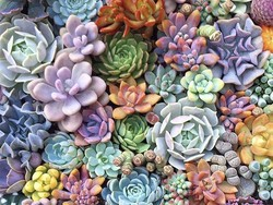 Add some greenery to every room with 20 succulents for only $28