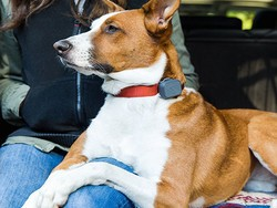 Get the $55 Whistle 3 GPS Pet Tracker & Activity Monitor