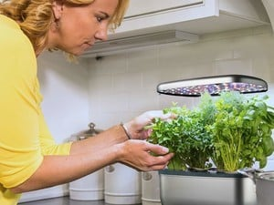 Grow herbs in your kitchen all year round with the $80 AeroGarden Harvest
