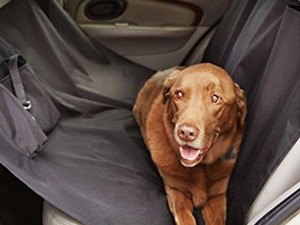Both your vehicle and your dog will love this $17 AmazonBasics Car Seat Cover