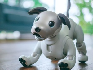 Sony made a robot puppy and you can pre-order it for $2,900