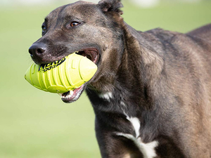 These discounted Nerf toys are designed for dogs, but you'll have a blast too