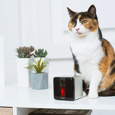 Petcube Play Smart Camera with Laser Toy
